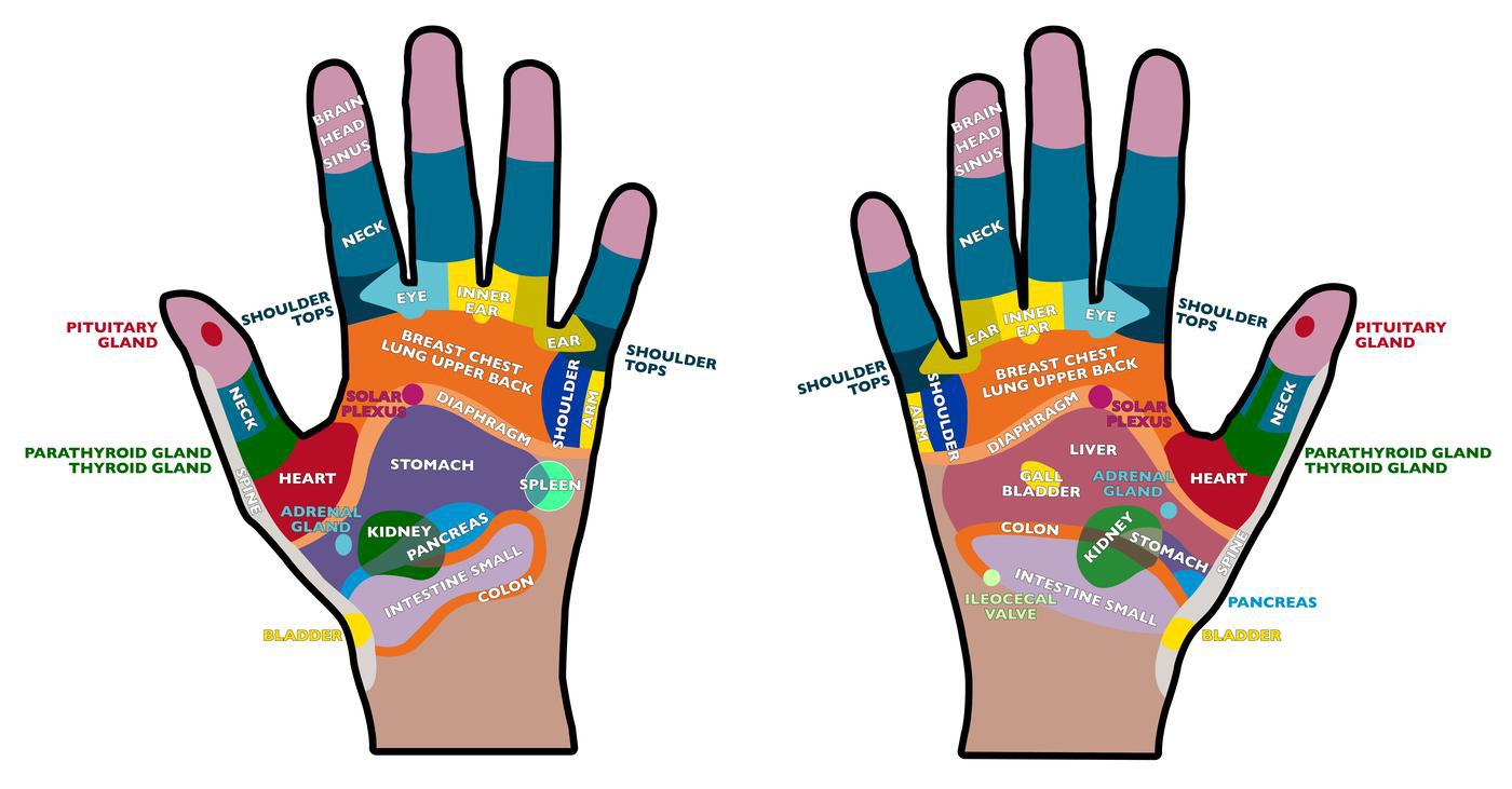 Reflexology Massage Points Hand Palm
